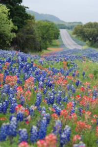 Spring Flowers Along Your Path to Success! Happy May!